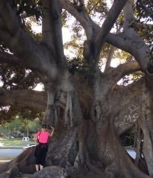 LA tree